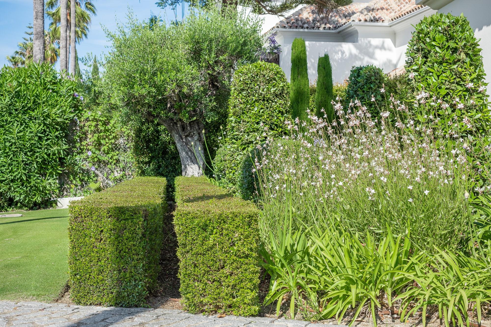 Sotogrande_Garden_Juan_Pedro Sacedon